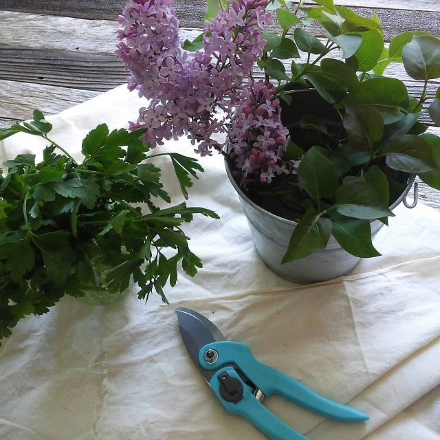The air is so fragrant right now lilac flowers gardenhellip